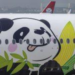 Pandy všade kam sa pozrieš